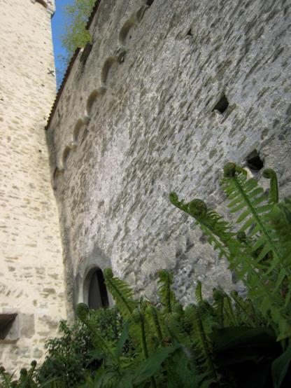 169 Odd plants beneath the wall