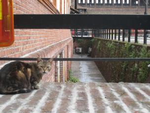 1069 Cat in a Castle
