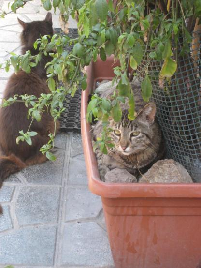 1272 Cats in Flower Pots