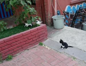 682 Kittens
