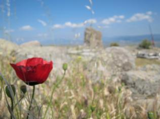 739 Flower and Ruins