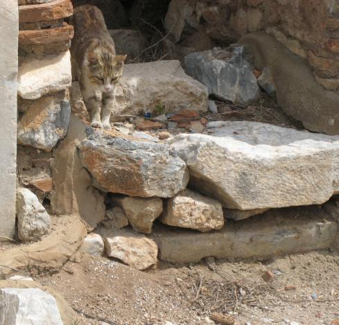 798 Cat Ruins