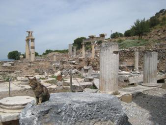 805 Cat Ruins