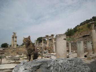 807 Cat Ruins