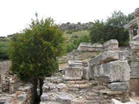 813 Nature in Ephesus
