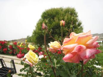871 Flower