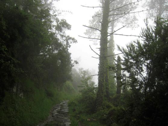 1545 Cloudy Path