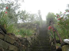 1547 Someones Garden